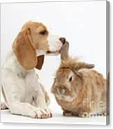 Beagle Pup And Rabbit Canvas Print