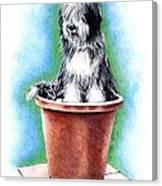 Beardie In A Pot Canvas Print
