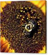 Bee And Sunflower Canvas Print