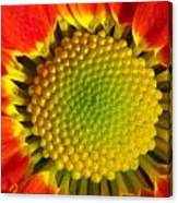 Bee's View Canvas Print