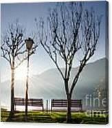Bench And Trees Canvas Print