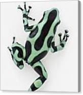 Black And Green Poison Dart Frog Canvas Print