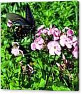 Blackie Canvas Print