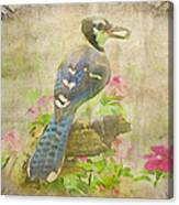 Blue Jay With Texture II Canvas Print
