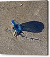 Blue On The Beach Canvas Print