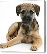 Border Terrier Puppy Canvas Print