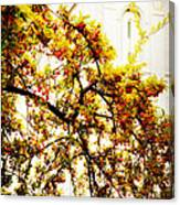 Branch Of Heaven Canvas Print