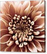Brown Flower Canvas Print