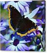 Butterfly In Blue Canvas Print