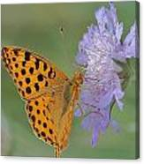 Butterfly On Right Position Canvas Print