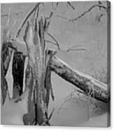 Bw Snowy Stump Canvas Print