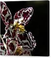 C Ribet Orchids Canvas Print