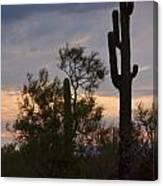Cactus Vantage Canvas Print