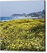 California Wildflowers Canvas Print