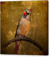 Cardinal II Canvas Print