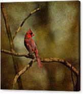 Cardinal IIi Canvas Print