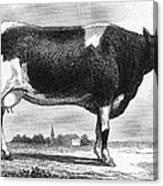 Cattle, 19th Century Canvas Print