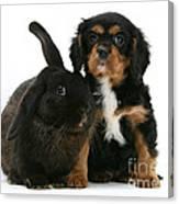 Cavalier King Charles Spaniel And Rabbit Canvas Print