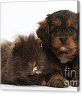 Cavapoo Pup And Shaggy Guinea Pig Canvas Print