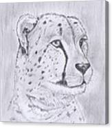 Cheeta Watching Canvas Print