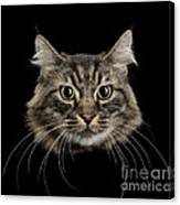 Close Up Of Cats Face Canvas Print