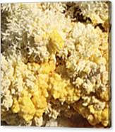 Close-up Of Yellow Salt Crystals Canvas Print