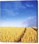 Co Carlow, Ireland Barley Canvas Print