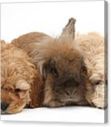 Cockerpoo Puppies And Rabbit Canvas Print
