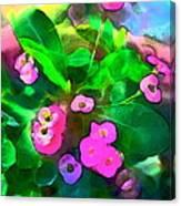 Color 115 Canvas Print