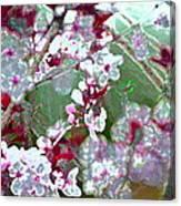 Color 59 Canvas Print