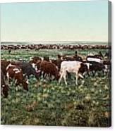 Colorado: Round Up Canvas Print