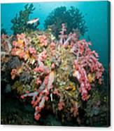 Colorful Reef Scene, Komodo, Indonesia Canvas Print