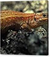 Common Lizard Canvas Print