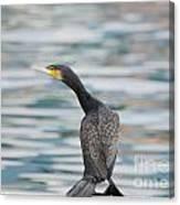 Cormorant Bird Canvas Print
