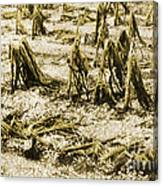 Cornfield After Hailstorm Canvas Print