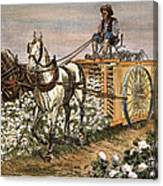 Cotton Harvester, 1886 Canvas Print