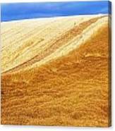 Crops, Oil Seed Rape Canvas Print