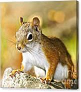Cute Red Squirrel Closeup Canvas Print