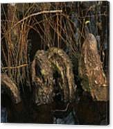 Cypress Knee Monster Canvas Print