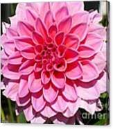 Dahlia Named Lucky Number Canvas Print