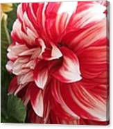 Dahlia Named Myrtle's Brandy Canvas Print