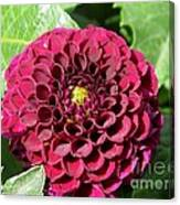 Dahlia Named Pride Of Place Canvas Print