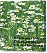 Daisy Fresh Canvas Print