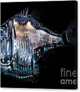 Deep-sea Hatchetfish Canvas Print