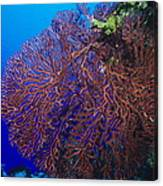 Deep Water Sea Fan Canvas Print