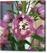 Delphinium Named Magic Fountains Lilac Pink Canvas Print