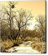 Desert Trail Canvas Print