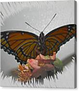 Designer Butterfly Collection Canvas Print