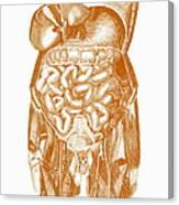 Digestive System Canvas Print