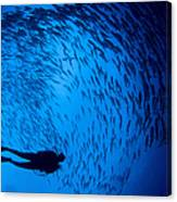 Diver And A Large School Of Bigeye Canvas Print